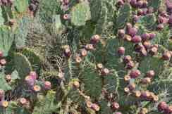 75- of the Cactus Creek property will remain in native Sonoran Desert vegetation
