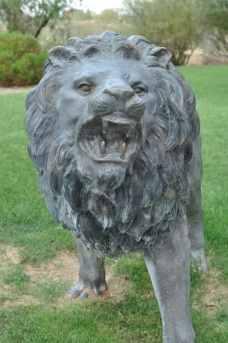roaring lion at Rancho Sahuarita