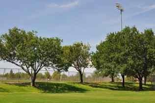trees at Abraham Lincoln Regional Park