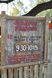 Giraffe Feeding is $2-person at Reid Park Zoo