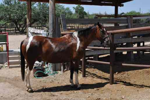 There are 150+ horses on-property at Tanque Verde Ranch