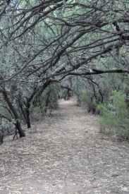 a popular photo spot at Tanque Verde Ranch
