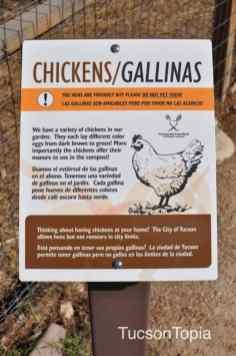 Chickens at Community Food Bank of Southern Arizona