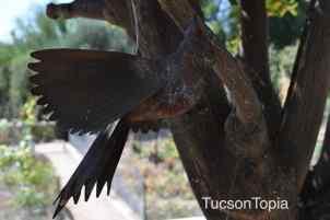 bird art at Tohono Chul Park