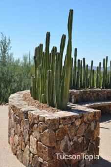 cactus circle at Tohono Chul Park
