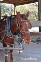 horse at Old Tucson