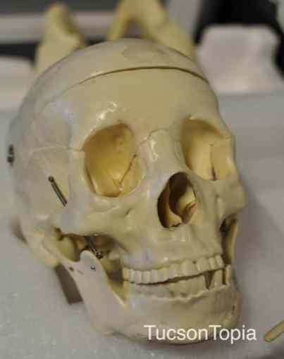 skull-at-BASIS-Tucson