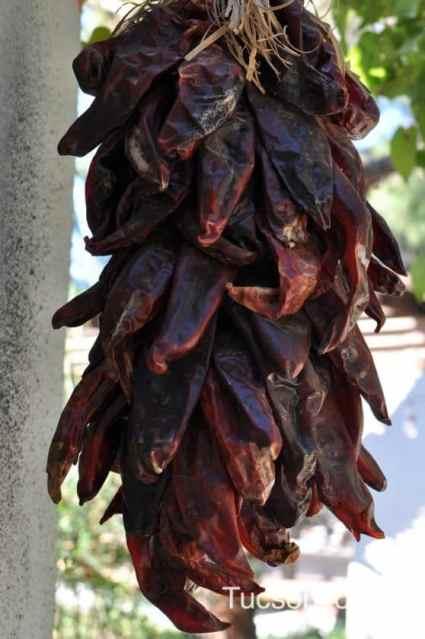 chilis at Tucson Botanical Garden
