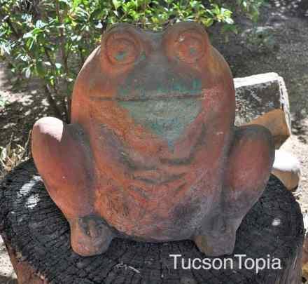 frog-at-Tucson-Botanical-Gardens