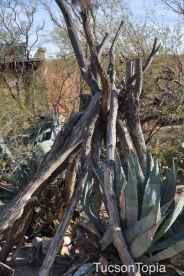 branch _teepee_ at DeGrazia Gallery in the Sun