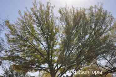 tree at La Madera Park