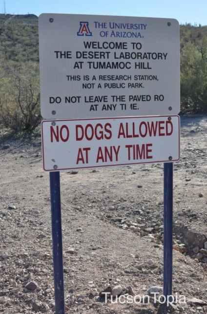 No-Dogs-Allowed-at-Tumamoc-Hill