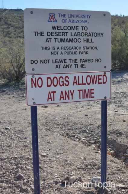 No-Dogs-Allowed-at-Tumamoc-Hill