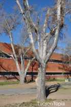 trees at University High School