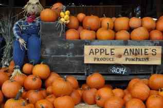 Apple Annie's Produce Pumpkins