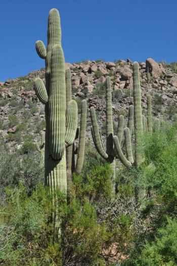 cactus at The Ritz-Carlton Dove Mountain
