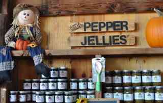 jellies at Apple Annie's