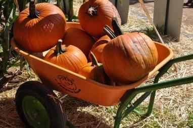 pumpkins for sale at Apple Annie's