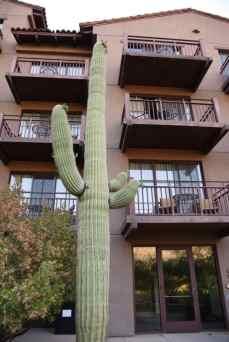 saguaro and balconies at Ritz-Carlton Dove Mountain