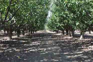 you-pick farm in Willcox