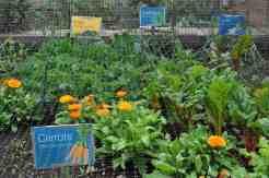 edible garden at Desert Botanical Garden