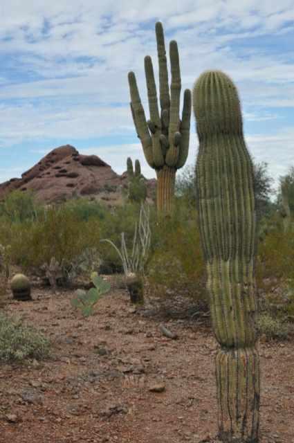 scenery at Desert Botanical Garden