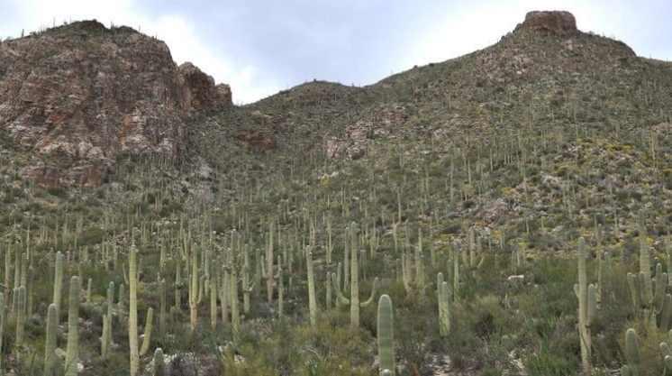 Pim Canyon