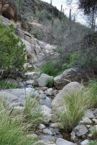 creek at Pima Canyon