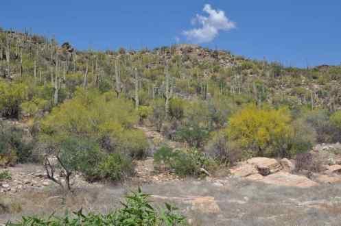 Sabino Canyon in Tucson