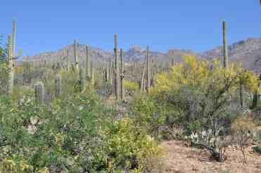 Desert at Sabino Canyon