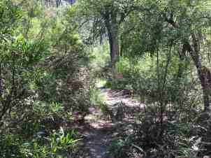 Sabino Canyon vegetation