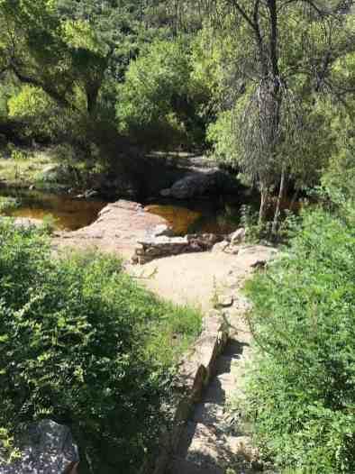 trees and water at Sabino Canyon