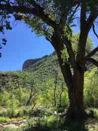 yearround hiking at Sabino Canyon
