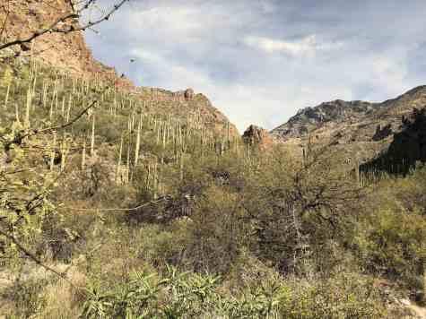 cactus and desert brush on Ventana Canyon Trail