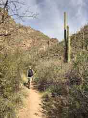 man hiking the Ventana Canyon Trail