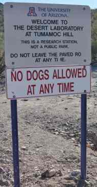 tumamoc-hill-dogs
