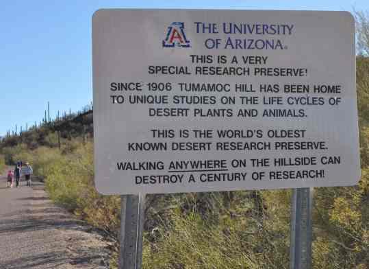 tumamoc-research-preserve