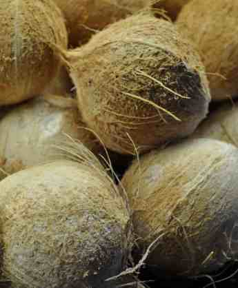 white coconuts ajs fine foods tucson