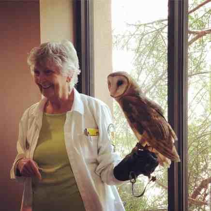 barn owl arizona sonora desert museum