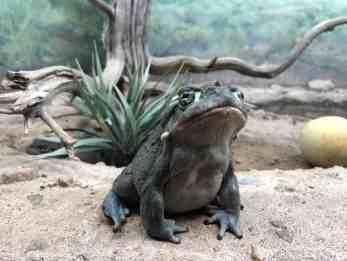 frog arizona sonora desert museum