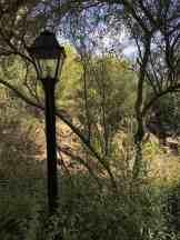 lamp arizona sonora desert museum