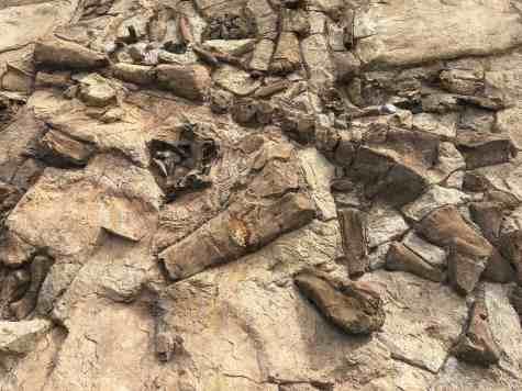 rocks arizona sonora desert museum
