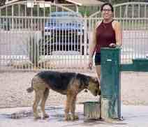 Water Fountain Dog Reid Park