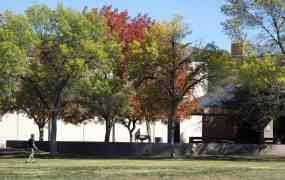 fall trees Udall Park Tucson