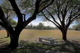 trees bench Purple Heart Park