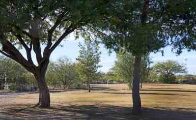 trees grass Purple Heart Park