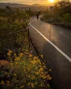 runner paved Tumamoc Hill
