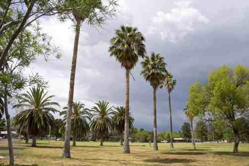 palm trees La Madera Park