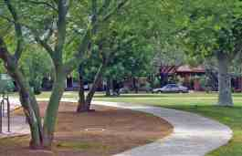 palo verde trees Catalina Park Tucson