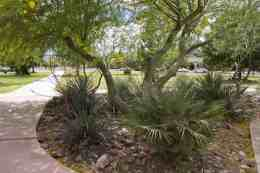 palo verde trees plants Catalina Park
